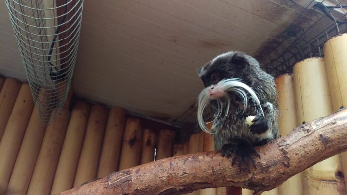 Greater Manchester warned of monkey welfare