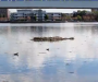 Debris in water stops Media City race