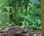 """""""Habitats where they can live safely and thrive"""" – The Salford scheme that's helping helping hedgehogs"""